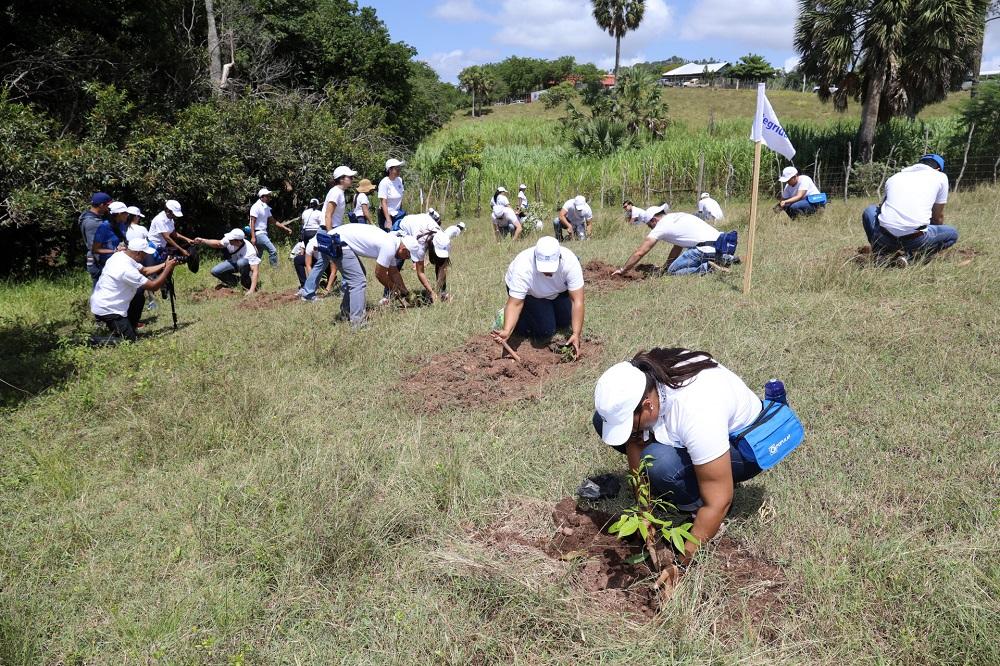 Empleados Popular siembran más de 3,300 árboles