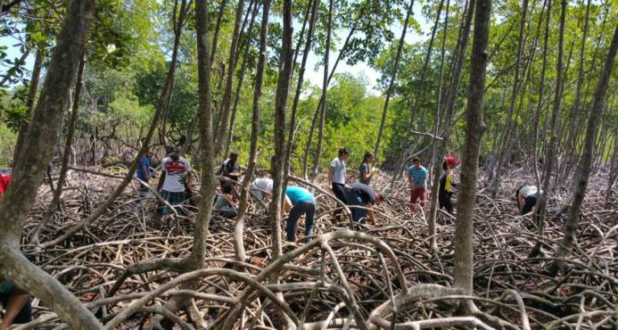 Siembran 30 mil mangles en el Parque Nacional Los Haitises