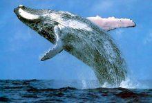 En conexión con las ballenas