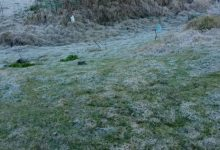 Valle Nuevo continúa presentando temperaturas por debajo de los cero grados